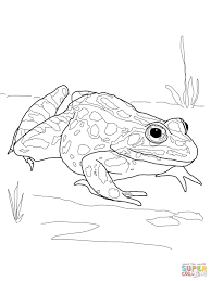 nothern leopard frog coloring free printable coloring pages