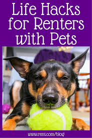 friends apartment cost the top pet hacks for your apartment stress free life hacks and