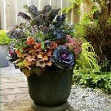 81 best cabbage in landscape designs images on fall