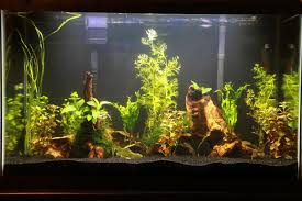 Best Substrate For Aquascaping Cichlid Forum U2022 Best Black Sand Substrate