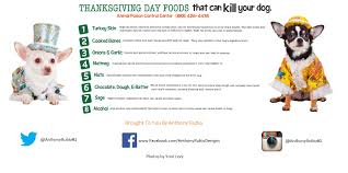 anthony rubio s tips for a safe thanksgiving for your