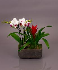 rio orchid garden same day delivery danvers ma currans flowers