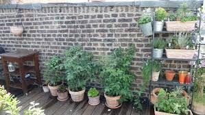 gem se pflanzen balkon gemüse