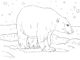 polar bear coloring free printable coloring pages