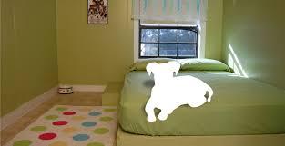 Dog Daycare Floor Plans by Pet Boarding Orlando Fl With Occc Don U0027t Just Board Reward