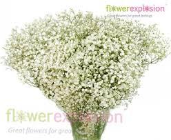 baby s breath flowers gypsophila mirabella babys breath flower plant bouquets online