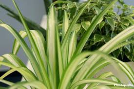 plants low light outdoor plants that need little light best indoor plants low light
