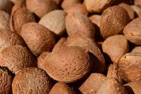 christmas nuts nuts are tasty nutritious versatile and not just for christmas