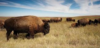 North Dakota travel merry images Exploring north dakota 39 s badlands jpg