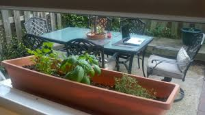Window Sill Garden Inspiration Grow Herbs On Windowsill Planter Home Decorations Insight