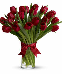 Images Of Tulip Flowers - red tulips san diego red tulip flowers san diego red tulip