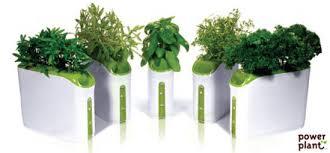 herbs indoors growing herbs indoors in provera s mini power plant