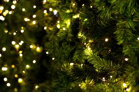 wilbur u0026 rudy u0027s christmas tree farm canton georgia
