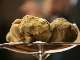 italian white truffle italian white tuffle