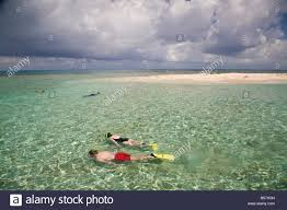 tourists snorkelling bird island belize central america stock