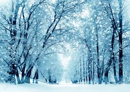 winter tree stock photos pictures royalty free winter tree