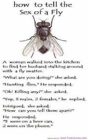 Sex Meme Quotes - how to tell the sex of a fly joke
