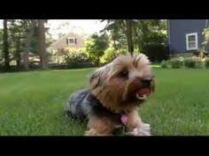 afghan hound dogs 101 dogs 101 afghan hound wonderful afghans hounds pinterest 개