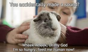 Guinea Pig Meme - you accidentally made a sound oh my god i m so guinea pig meme