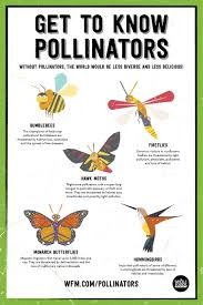 native plants for butterflies protecting pollinators whole foods market