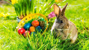 easter bunny 10 things you may not about the easter bunny mental floss