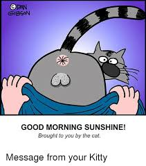 Good Morning Sunshine Meme - opan gibson good morning sunshine brought to you by the cat