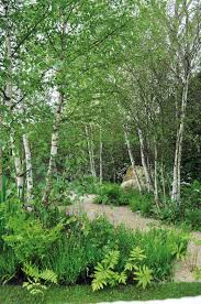 top small trees for garden designers garden design journal