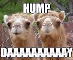 Hump Day Camel Meme - 54 best camel cameos images on pinterest funny camels animal