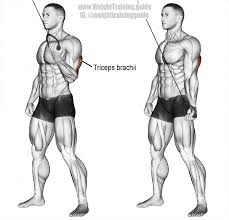 cable one arm reverse grip triceps push down exercise 01 brazos