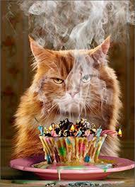 Cat Birthday Cards Amazon Com Avanti Press Cat And Cupcake Funny Birthday Card