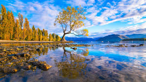 arguably the most beautiful tree in the world lake wanaka new