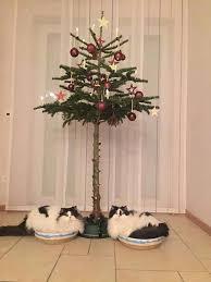 16 pet proof christmas trees u2013 pleated jeans