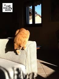 gatti divani copridivano con tessuto antigraffio cat friendly sofa