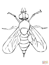 drosophila fruit fly coloring page free printable coloring pages