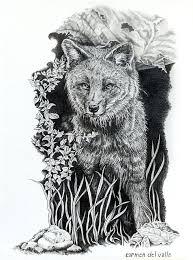 darwin u0027s fox drawing by carmen del valle