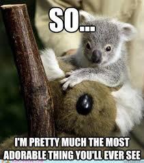 Koala Bear Meme - funny koala bear memes memes pics 2018
