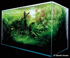amano aquascape a path to the finished aquarium by takashi amano