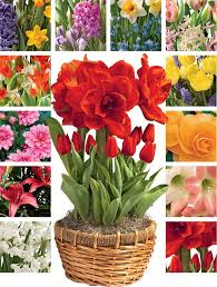 monthly flower delivery best 25 monthly flower delivery ideas on peonies