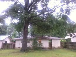 Planting Fruit Trees In Backyard Can I Plant Fruit Trees Next To This Big Oak Tree In Backyard