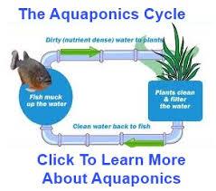 aquaponicsideasonline com