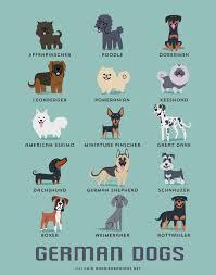types of american eskimo dogs german dogs affenpinscher poodle doberman leonberger