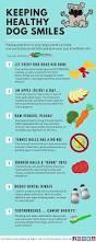best 20 dog breath remedies ideas on pinterest bad dog breath