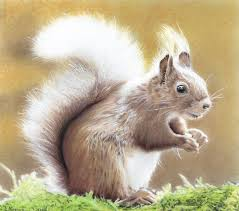 beautiful creatures grayscale coloring book squirrel