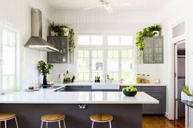 plants for on top of kitchen cabinets 12 best kitchen plants ideal houseplants to live in