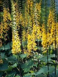 97 best gardening in the shade images on pinterest gardening
