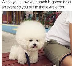 Dog Text By Memeemma Meme - 10 best dog memes images on pinterest dog memes funny dogs and