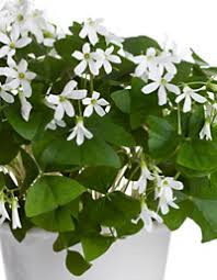 Easy To Care For Indoor Plants Recommended Indoor House Plants At Womansday Com Common Houseplants