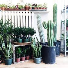 23 instagrams that prove snake plants are the new fiddle leaf fig