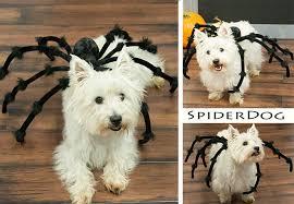 Spider Dog Halloween Costume 10 Easy Diy Howl Ween Costumes Woof Burnaby Dog