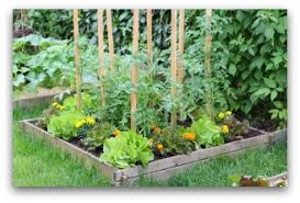 Small Vegetable Garden Plans And Ideas - Backyard vegetable garden designs